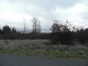 ENJOY LIVE / WORK LIFESTYLE with AGRICULTURAL RAW LAND – Enumclaw, WA